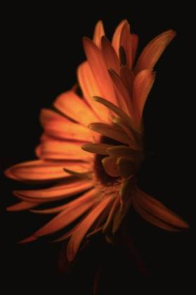 terry davis sunflower