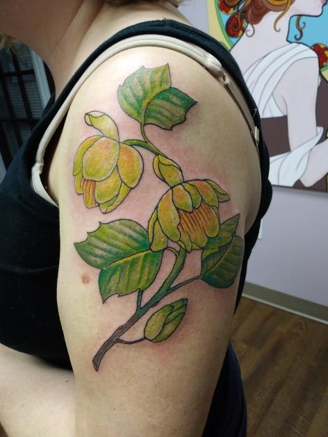 tulip poplar - Liz Underwood