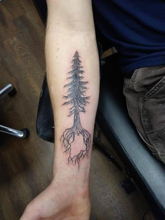 tree with Maine in roots - Austin Merando